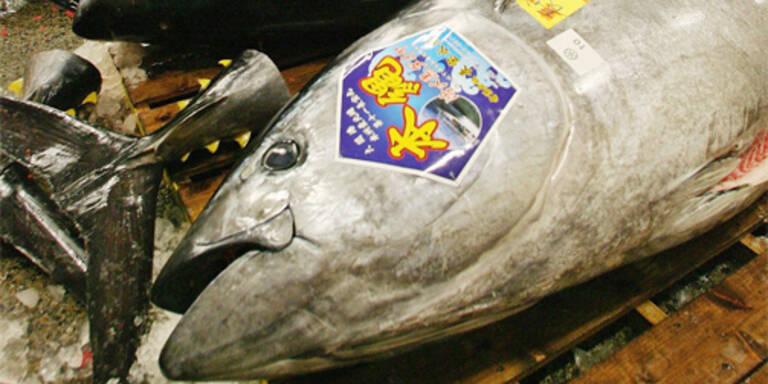 Thunfisch-Bestände dramatisch geschrumpft