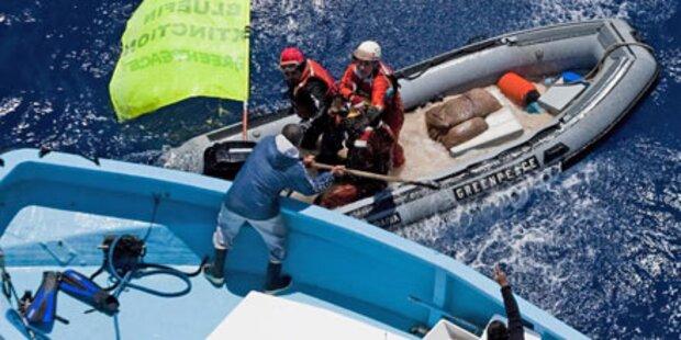 Thunfisch-Krieg wird immer brutaler