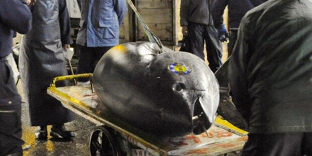 Thunfisch für 297.000 Euro ersteigert
