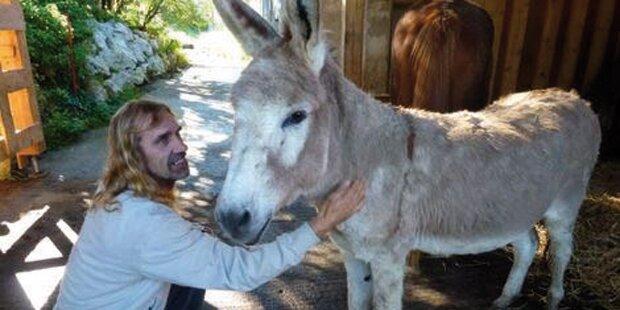 Tier-Drama: Gnadenhof vor dem Aus