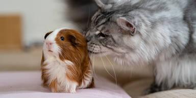 Katze und Hamster