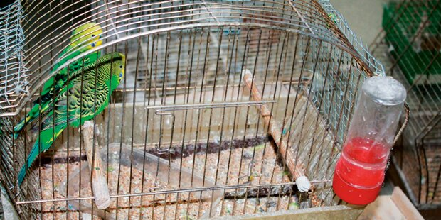 165 Vögel aus Restaurant befreit