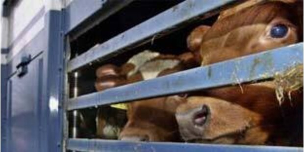 Tiertransporter in Steiermark gestoppt