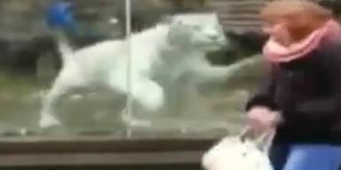Schock: Tiger erschreckt Frau in Zoo