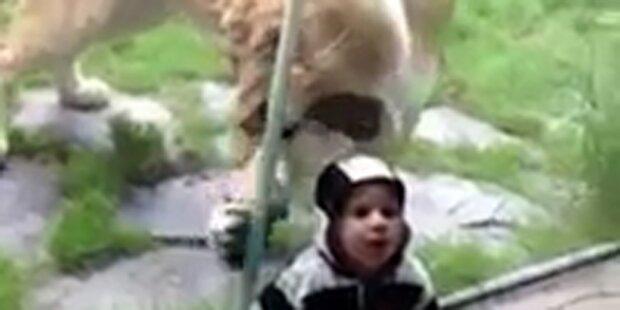 Glas schützt Baby vor Löwen-Attacke