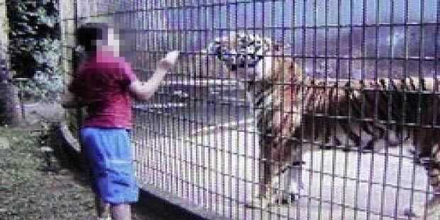 Tiger zerfleischt Arm eines Buben (11)