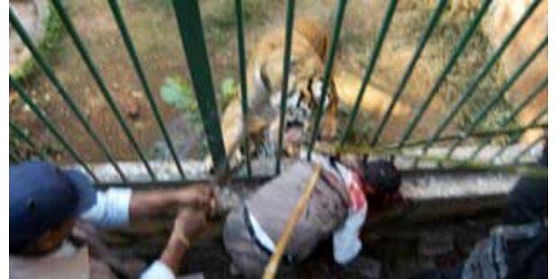 Zoobesucher von Tiger in Stücke gerissen