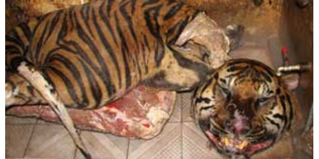 Illegale Tiger-Balsam-Produktion in Vietnam