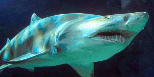 EU-Diplomat von Hai gebissen