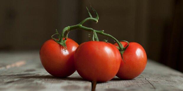 Sind Tomaten für Menschen gefährlich?