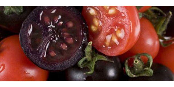 Violette Tomaten gegen Krebs