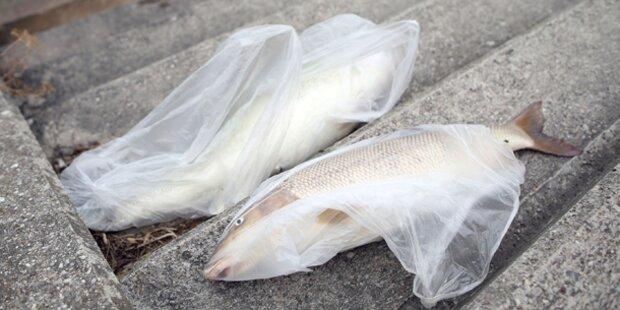 Hitze: Die ersten Fische sterben