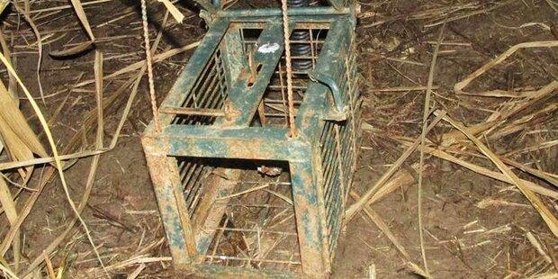 Hund durch verbotene Falle getötet