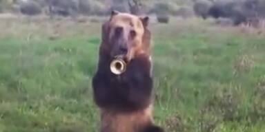 Talentierter Braunbär spielt Trompete