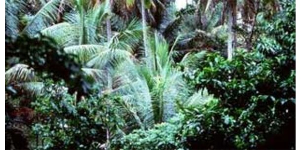 Wissenschaftler rechnen mit neuer Tropen-Seuche