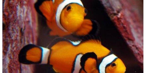 Tausende Fische auf Flughafen verendet