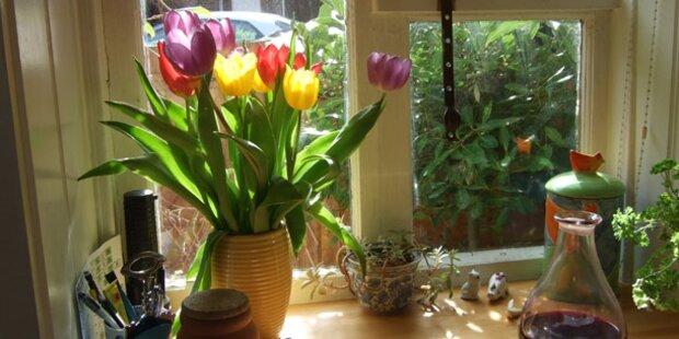 Holen Sie sich den Frühling in die Wohnung