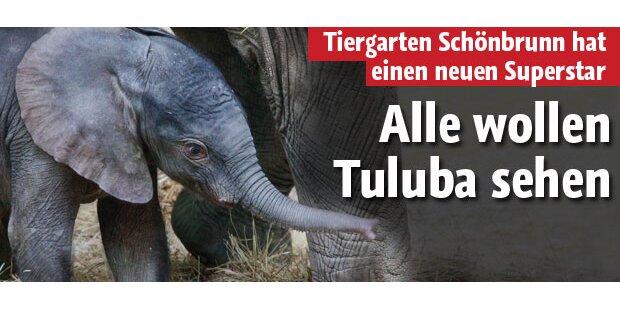 Alle wollen Tuluba sehen