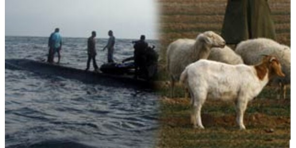 Briten stellen U-Boot-Versuche mit Ziegen ein