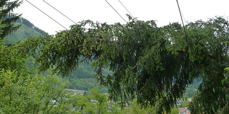 Unwetter: Baum stürzte in Kärnten auf Bahnlinie