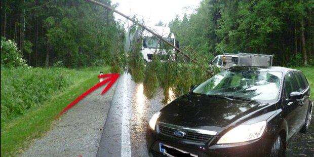 Fahrendes Auto von Baum erschlagen