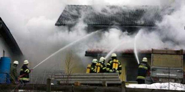 200 Schweine kamen in Flammen um