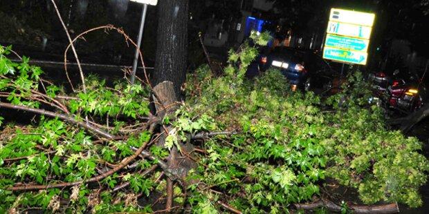 Schwere Unwetter und Stürme im Waldviertel