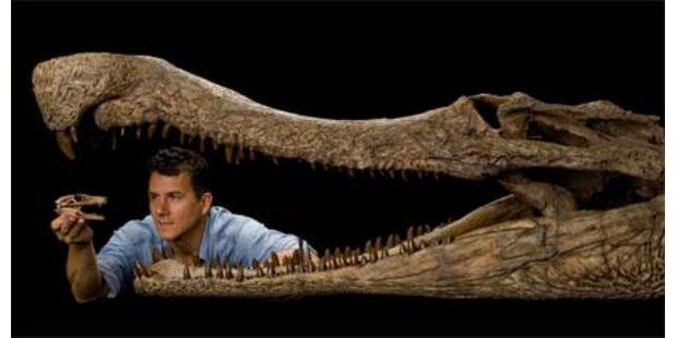 Forscher entdecken 5 Urzeit-Krokodile