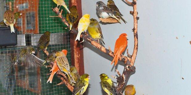 1.200 Vögel suchen ein neues Zuhause