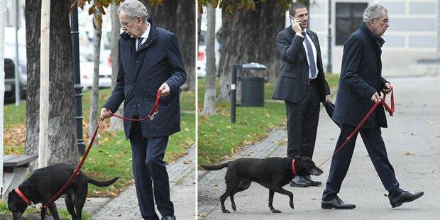 Hier geht Van der Bellen mit seinem Hund spazieren