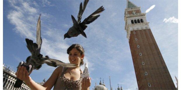 Tauben-Füttern in Venedig künftig strafbar