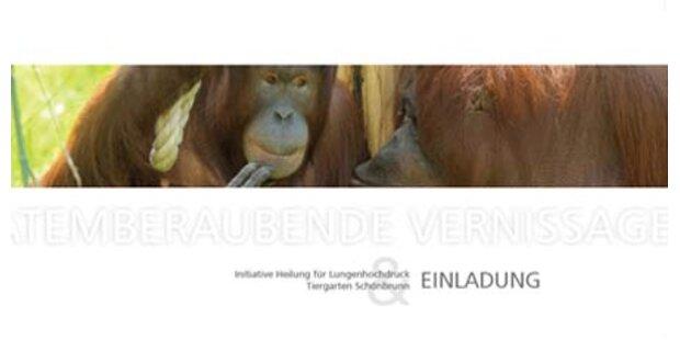 Ambros versteigert goldene Austria 3-CD