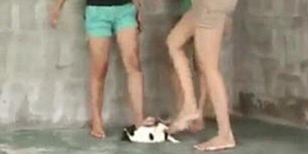 Paar dreht Folter-Videos mit Kindern und Tieren