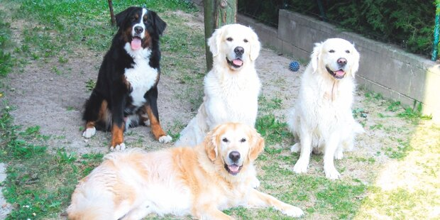Rätselraten um vier vergiftete Rasse-Hunde