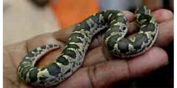 Schlangenbiss - Mann wollte sich zwei Finger amputieren