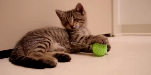 Rührend: Internet-Hype um blindes Kätzchen