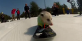 Snowboard-Opossum neuer Internet-Hit