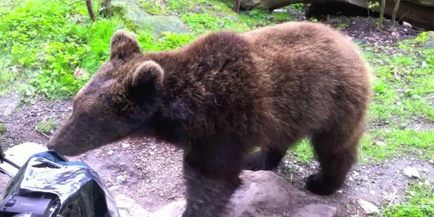 Bärenvideo Tirol