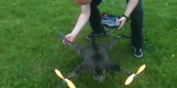 Makaber: Künstler baut Heli aus toter Katze