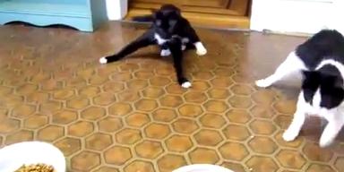 Katzen kurz nach dem Tierarztbesuch