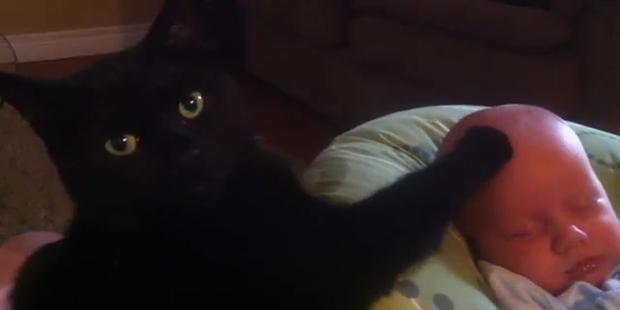 So süß: Katze streichelt Baby in den Schlaf