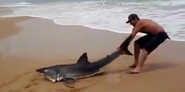Mann zerrt Hai an der Flosse zurück ins Meer