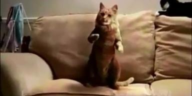 Youtube-Hit: Katze tanzt Gangnam-Style