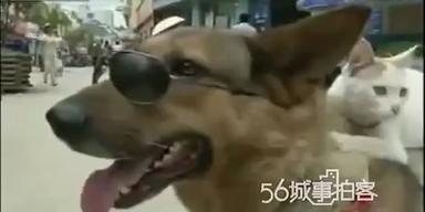 Hund trägt Katze auf seinem Rücken spazieren