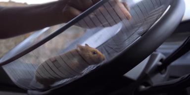 Kurios: Hamster lenkt LKW aus Grube