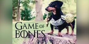 """Game of Bones"""