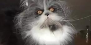 Diese Strubbel-Katze ist ein Social Media-Star