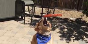 Hund versucht Futter zu fangen