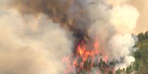 Portugal: Fast 900 Waldbrände im August