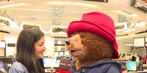 Paddington Bär begeistert